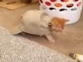 귀여운 동물 동영상!