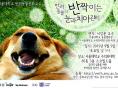 서울대반려동물교실, 내달 5일 '눈과 치아관리' 보호자 강의