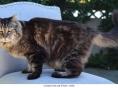 세계 최장수 26세 고양이, 기네스북 올라