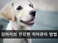 강아지의 건강한 치아관리 방법