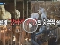 강아지공장 추방운동, '굿보이토토' 화제