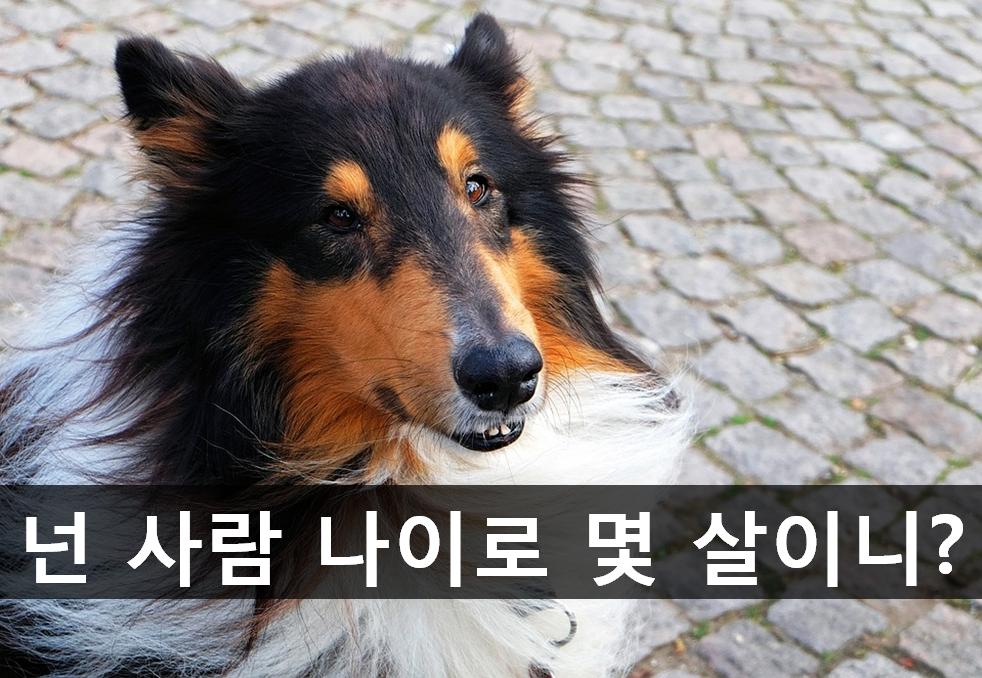 우리 강아지는 사람 나이로 몇 살일까?