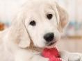 재미로 알아보는 강아지 지능 순위