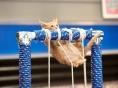 새끼고양이 대회 '키튼볼'..올림픽 겨냥?