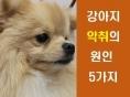 강아지 악취의 원인 5가지
