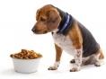 개와 고양이가 몸으로 표현하는 질병의 징후