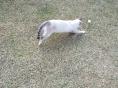 리퍼트 미국대사가 찾는다는 고양이 '나이키' 맞니?