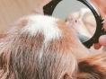 양요섭 거울 속의 양갱이