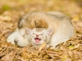 고양이와 함께 키우기 좋은 반려견 BEST 10