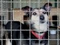 상습 동물학대땐 가중처벌... 동물보호법 개정안 공포