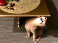 지드래곤, 테이블 밑 아이