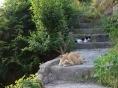 [길고양이 에세이] 길고양이들의 평화는 어떤 날일까