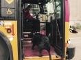 혼자 버스 타는 반려견..`시애틀 유명인사`