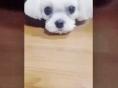 """소녀시대 서현 """"나 삐졌엉 흥칫뿡"""""""