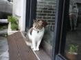 [길고양이 에세이] 아마 넌 이름이 있는 길고양이