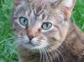 올해 출범한 美길고양이단체가 만든 `작은 기적`