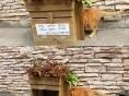 시민이 시작한 길고양이 급식소, 완고하던 시청을 바꿔놨다