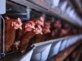 '공장형 밀집사육 금지' 동물보호법 개정안 발의