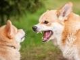 개 입마개 착용에 대한 몇가지 질문에 대한 답변