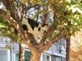 [길고양이 에세이] 굳세어라, 고양아!