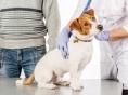 반려동물이 몸으로 표현하는 질병 징후 10가지(1)