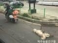 동물학대 처벌강화 첫날, 제주 오토바이 학대범이 받은 처벌은
