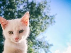 고양이가 주인 몰래 하는 사랑표현 12가지
