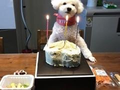"""엑소 세훈, """"생일 축하해 비비야!""""..생일상 받은 3살 비비"""