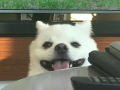 크러쉬, 웃는 모습이 사랑스러운 '두유'